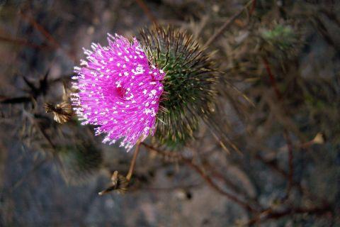 Flor en Cima